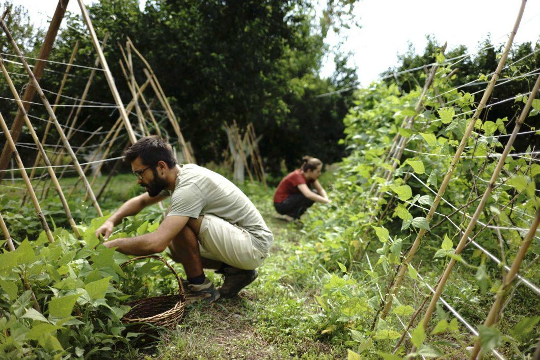 Ekolojik Bostan - İlaçsız Tarım
